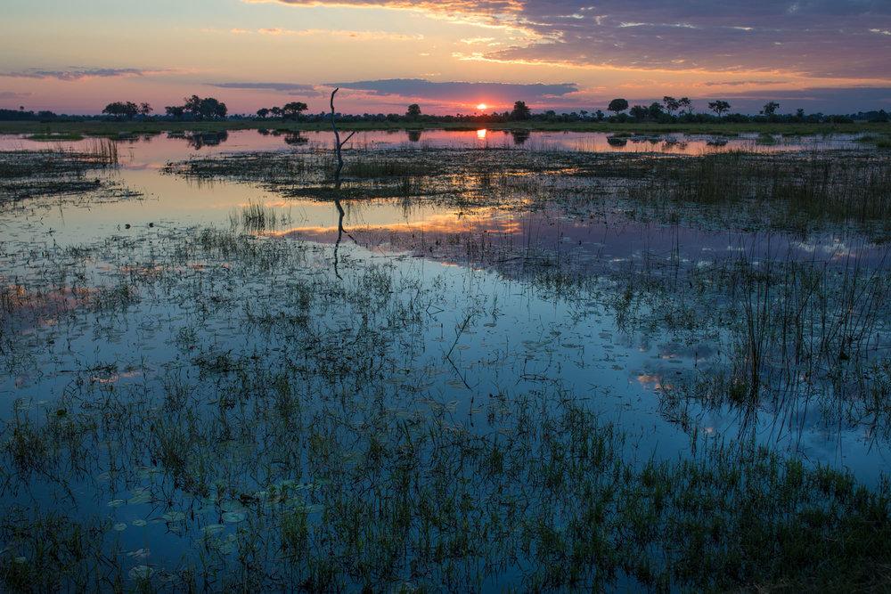 www. photoorganic.com.au7.jpg