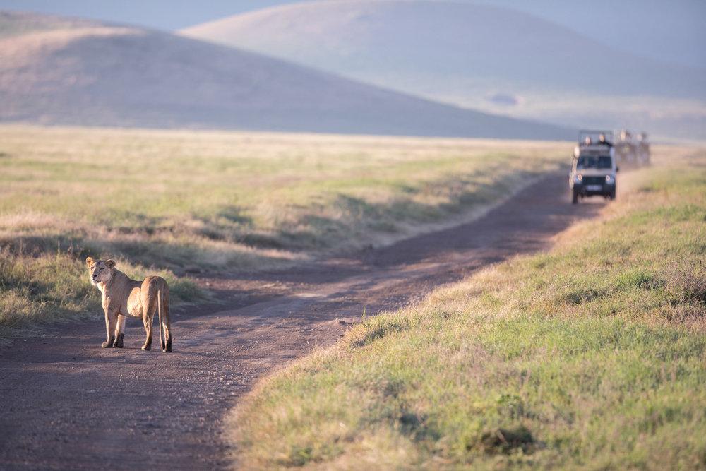 www. photoorganic.com.au85.jpg