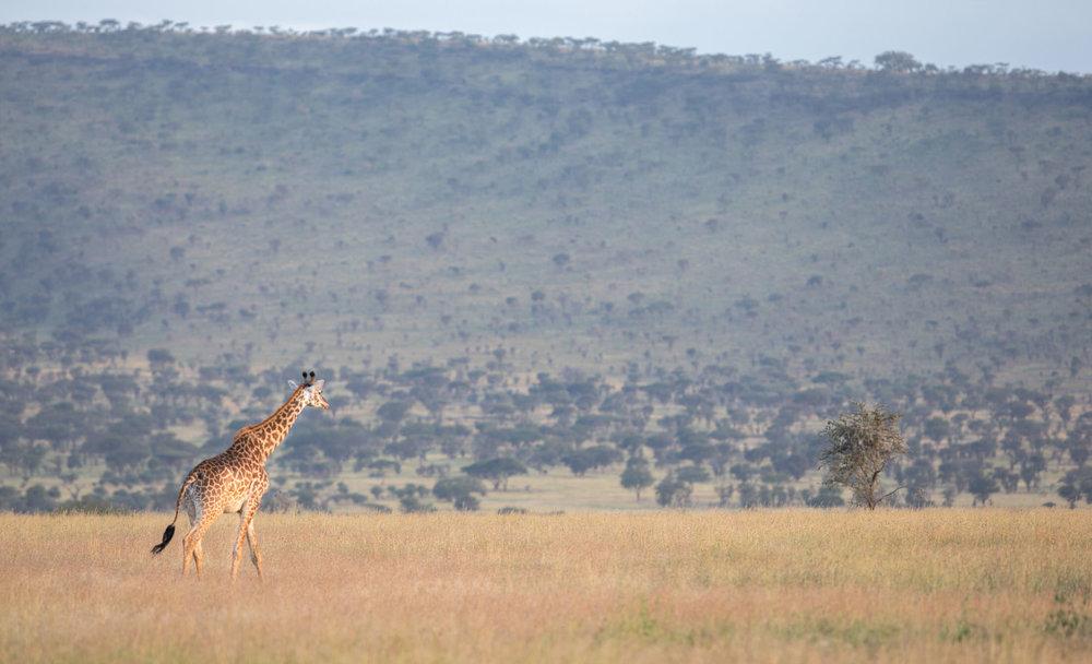 www. photoorganic.com.au96.jpg