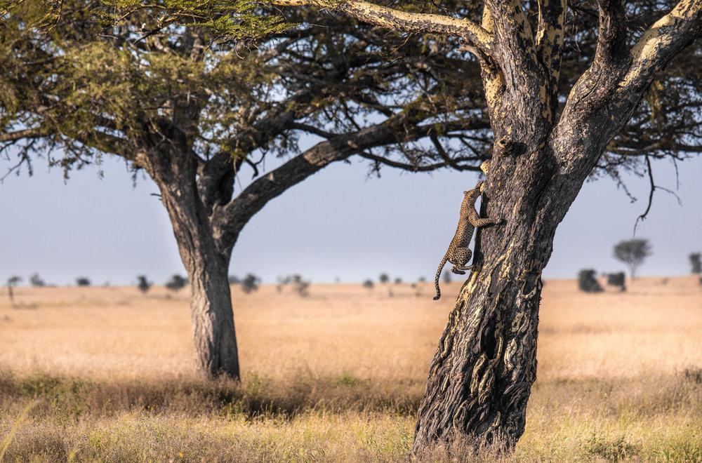 www. photoorganic.com.au106.jpg