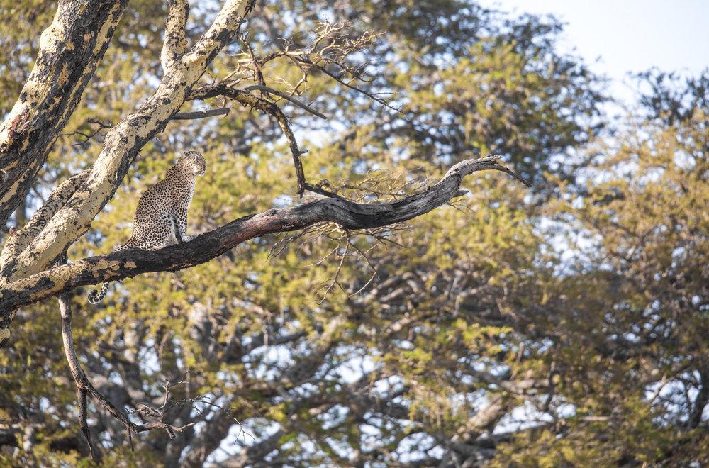 www. photoorganic.com.au108.jpg