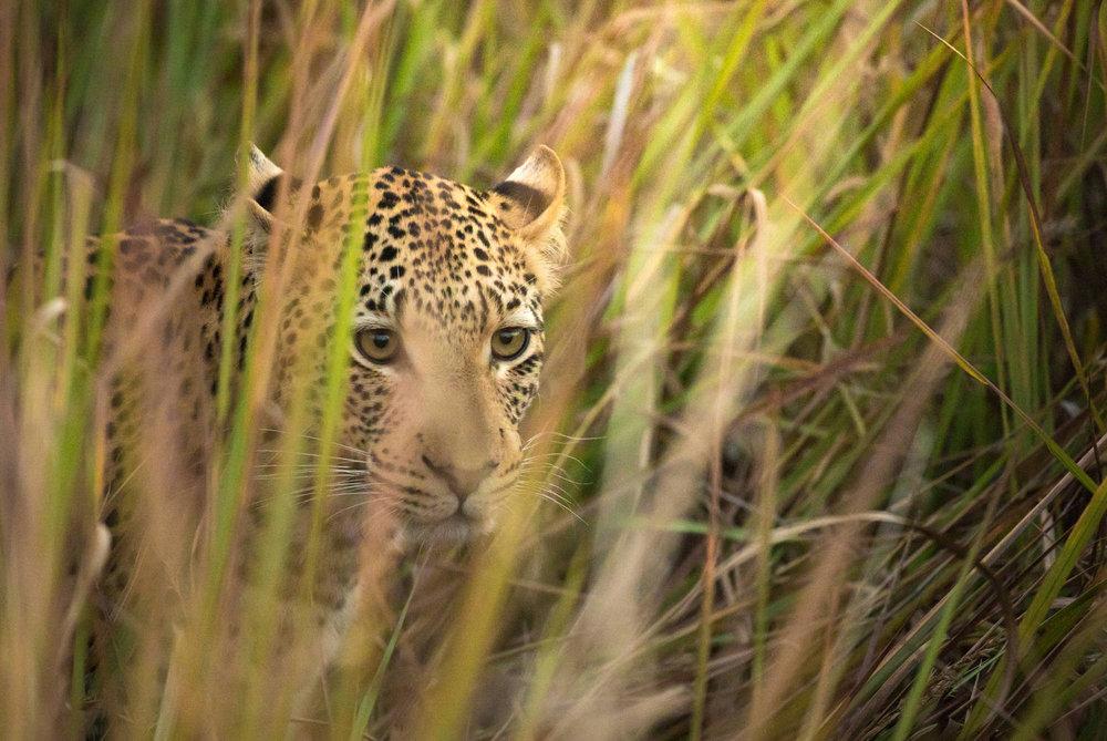 Okavango-90.jpg
