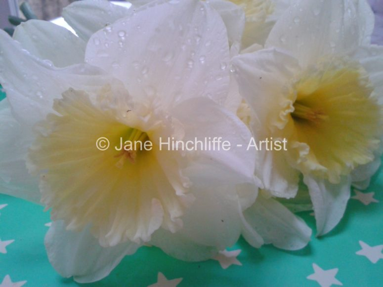 daffodils - Spring into your creativity