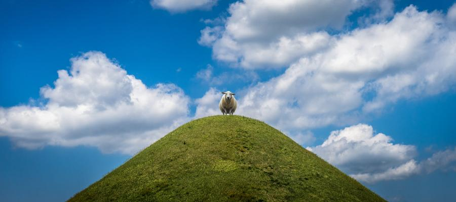 sheep-standing-on-top-of-a-hill-with-clouds-overhead.jpg