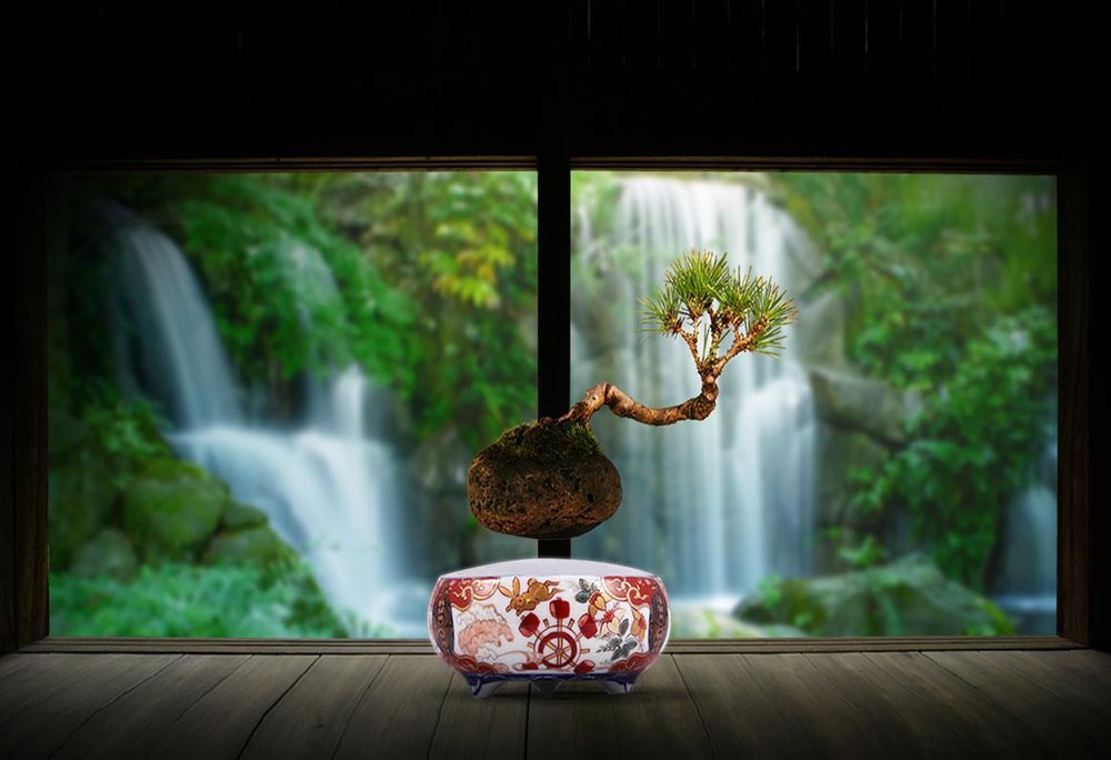 ©  Hoshinchu  floating bonsai