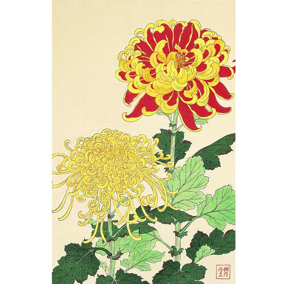 Chrysanthemum, Woodblock Print by Kawarazaki Shodo, 1950s