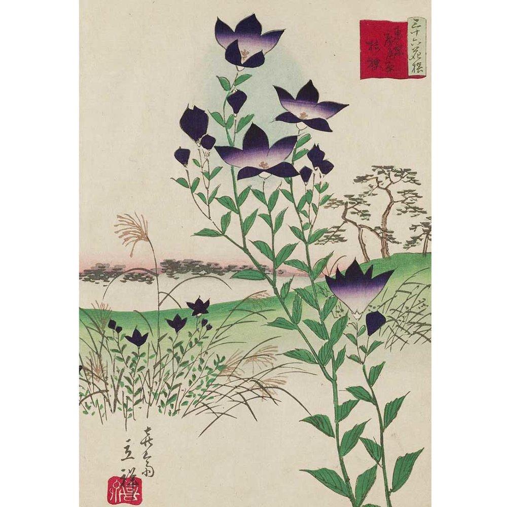 Bellflower, Woodblock Print by Utagawa Hiroshige II, 1866