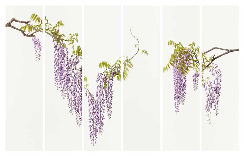 Related:Takashi Tomo-oka's Floral Photography Reveals the Essence of Nature -