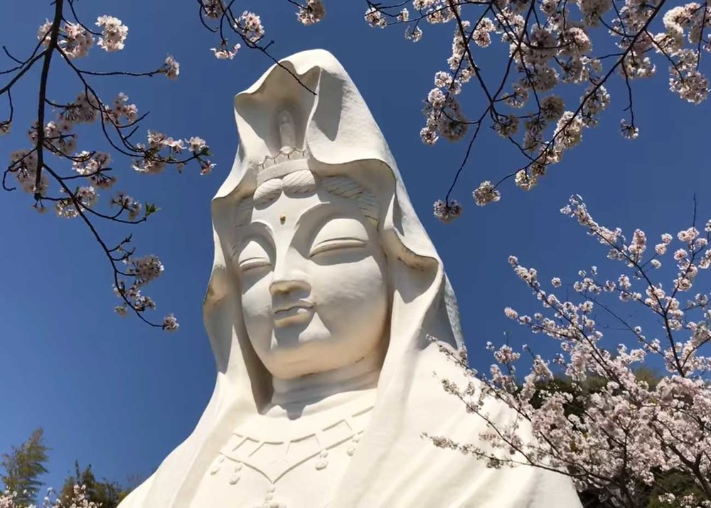 Ofuna Kannon Statue in Cherry Blossoms