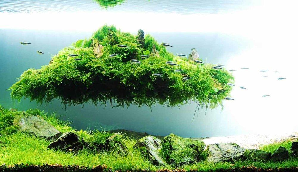 © Takashi Amano, Aquarium Landscape