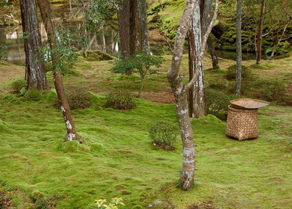 © Anika Ogusu, Real Japanese Gardens, Moss