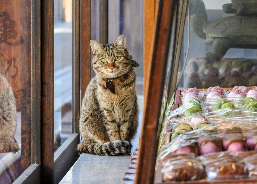 ©  M-Louis  /  Creative Commons , Cat Museum, Shizuoka