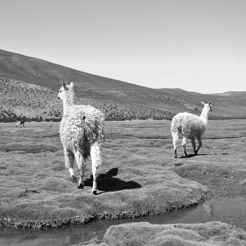 Llama_2.jpg