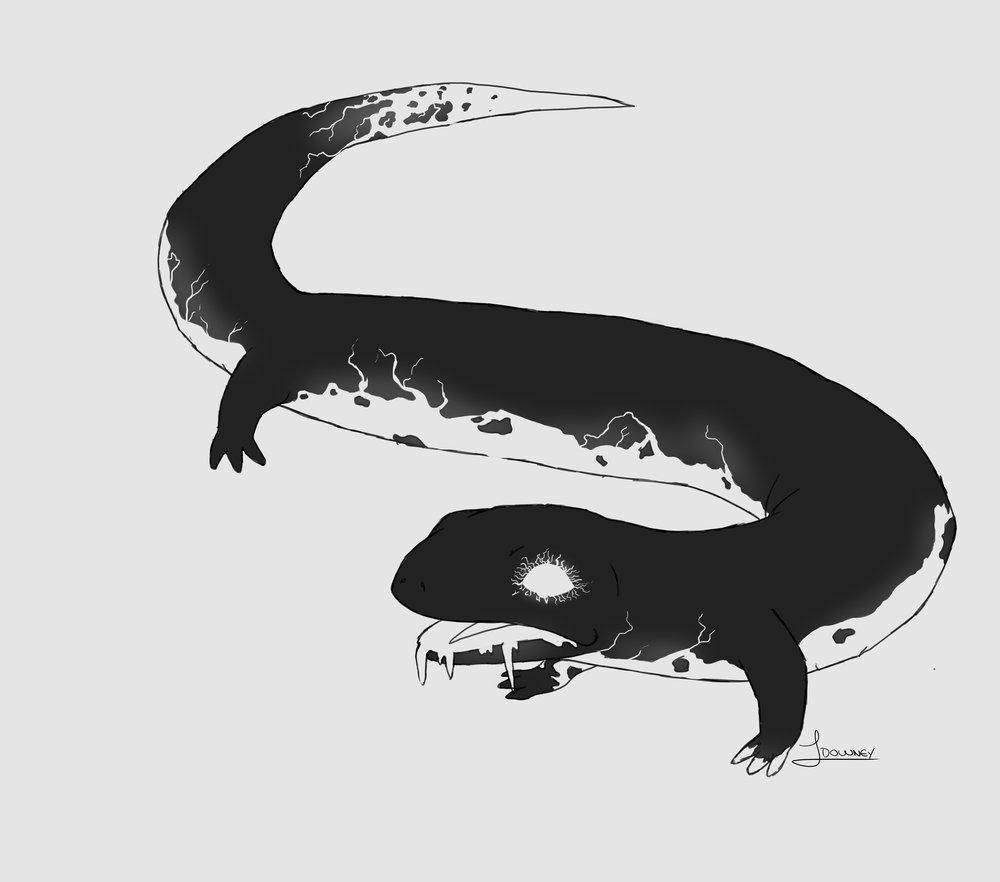 Salamander Grey.jpg