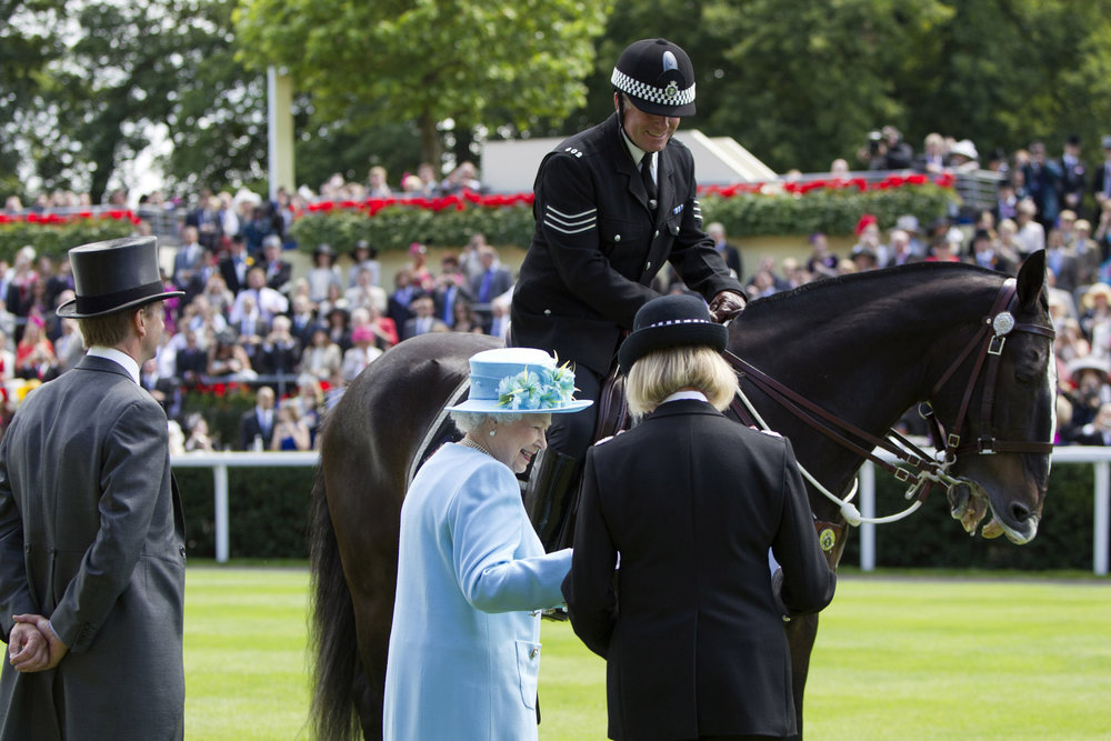 Clyde, Longest Serving Thames Valley Police Horse, now enjoying retirement at The Horse Trust, receiving a long service honour from HRH Queen Elizabeth II in 2011