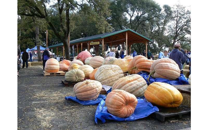 giant-pumpkin-fest-display2.jpg