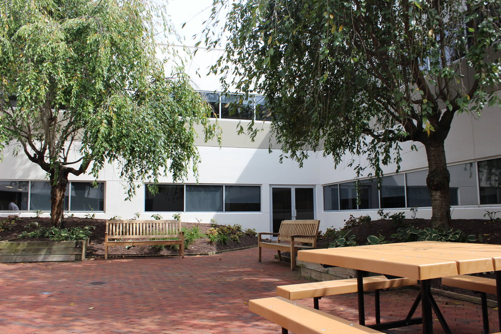 The building's courtyard was preserved during renovation to promote natural light within the building and provide a tranquil break area for employees throughout their work day.