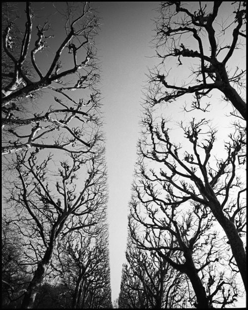 Paris trees 1