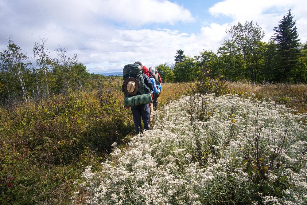 Ridge between Ojibwa and Franklin