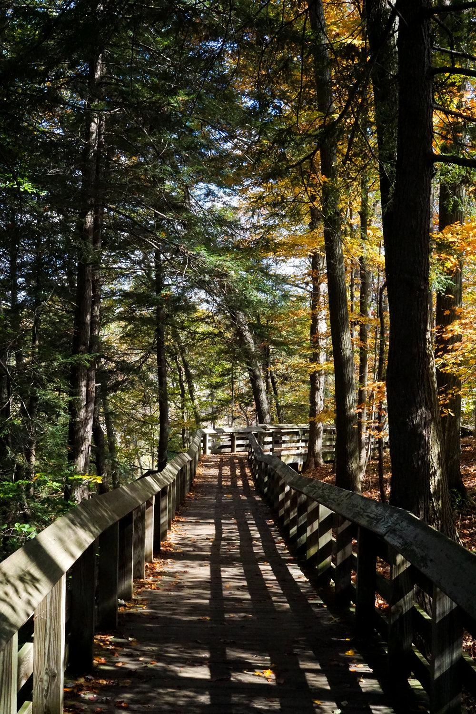 Path to Brandywine Falls
