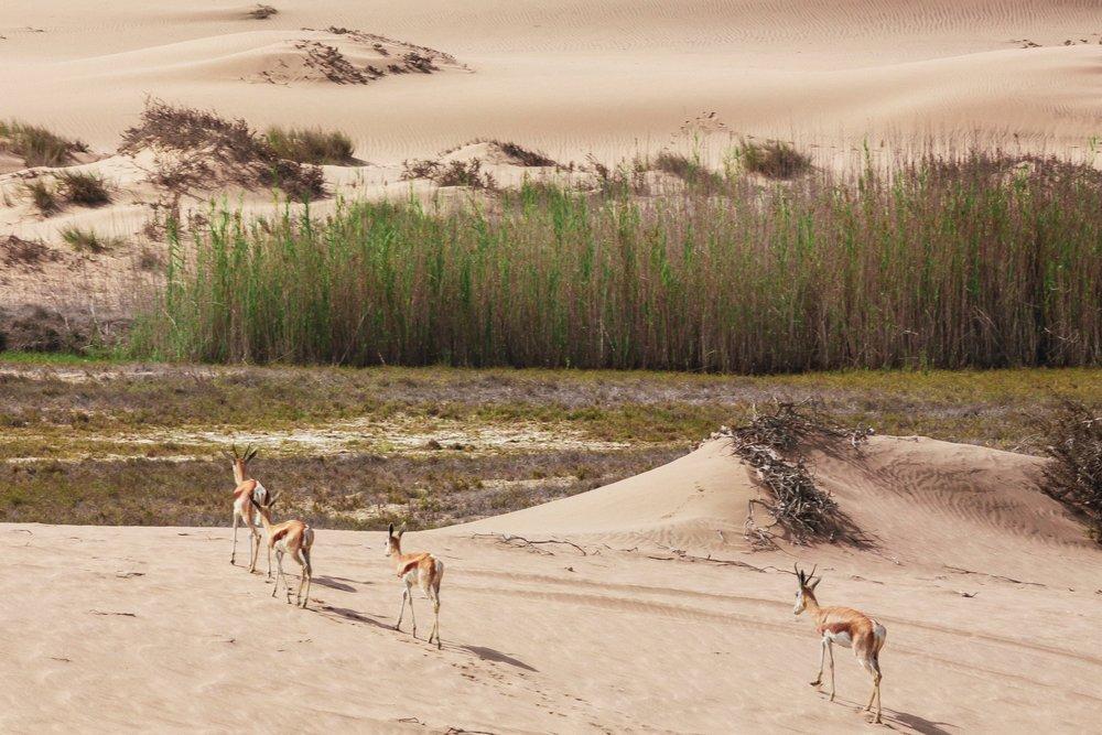 desertification2.jpg