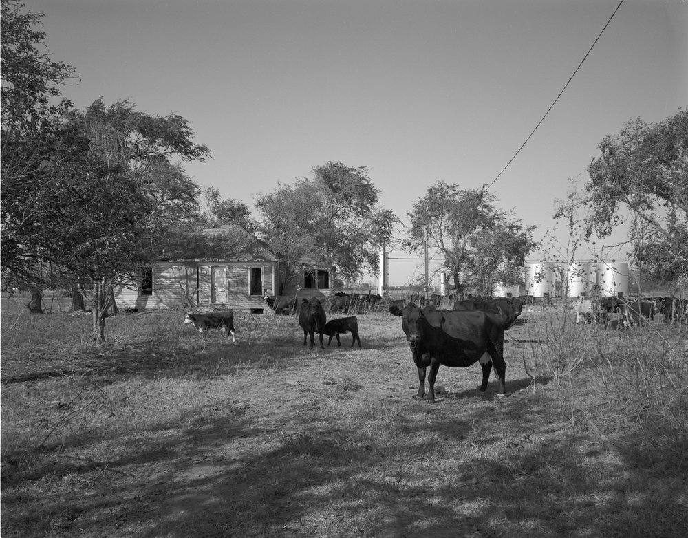 Oklahoma  House with Cows 1982