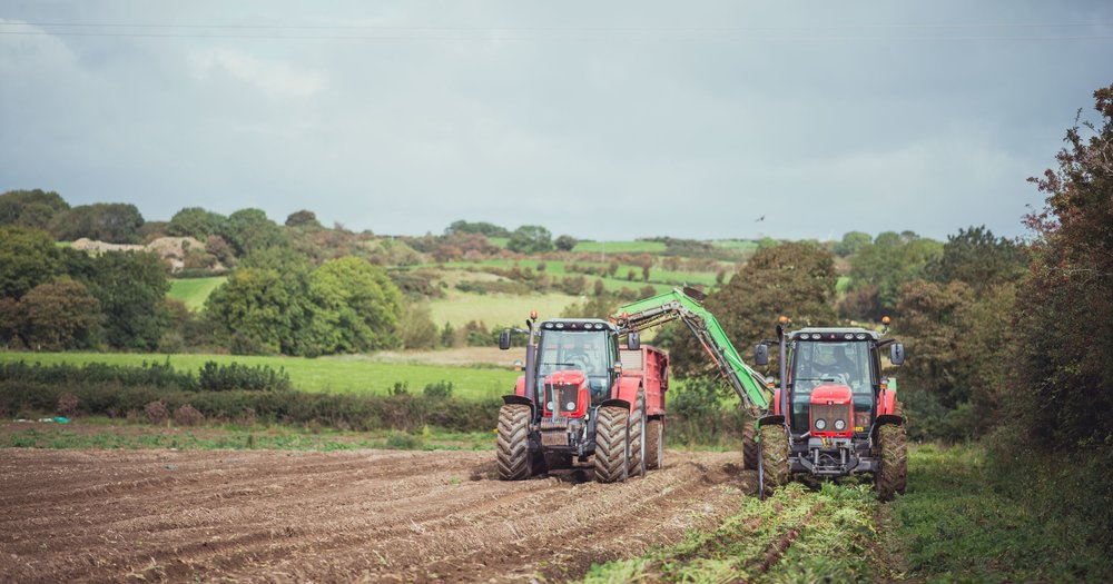 Experts in our Fields   With generations of farming knowledge under our belts, combined with innovative methods and technology, at Millbank Farm we produce great quality local produce for supermarkets across Ireland.