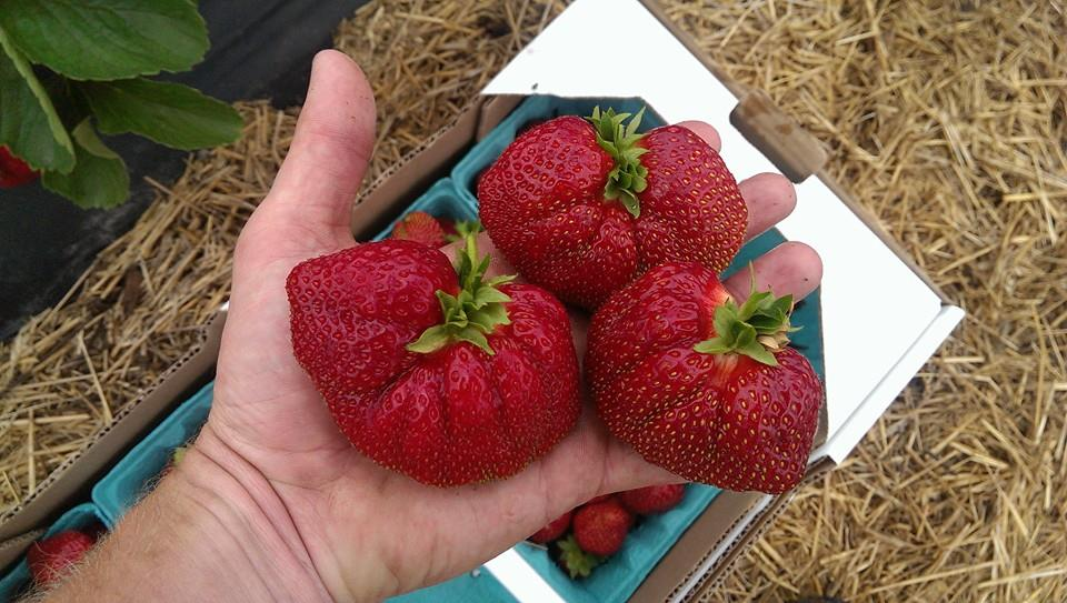 New York State Berry Growers Association Abbott Farms Baldwinsville NY berries