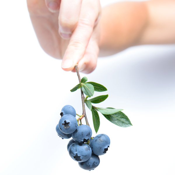 New York State berries local organic blueberries pesticide free