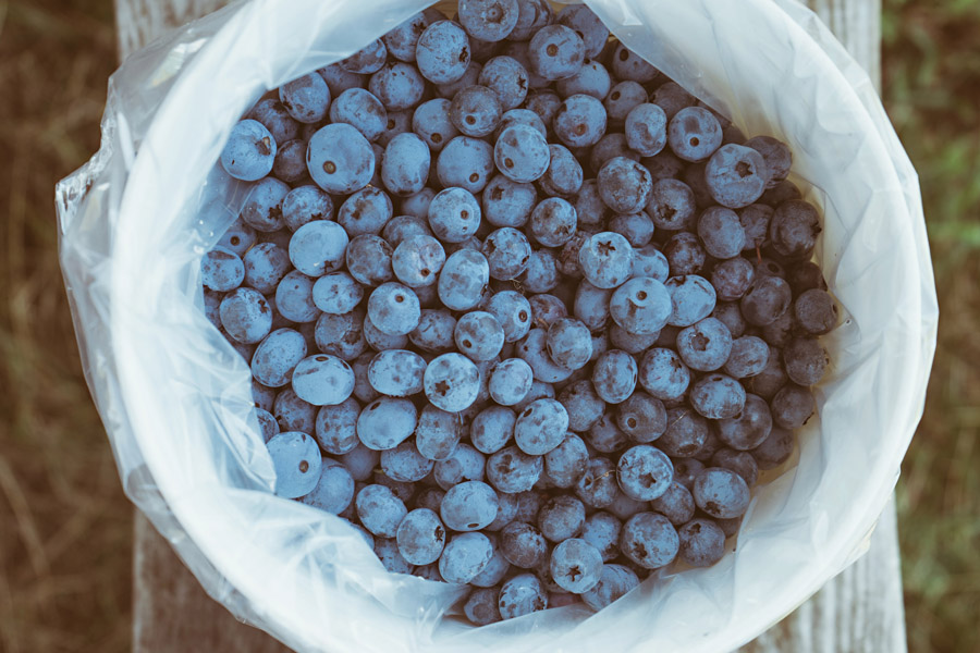 The (Many) Health Benefits of Blueberries -