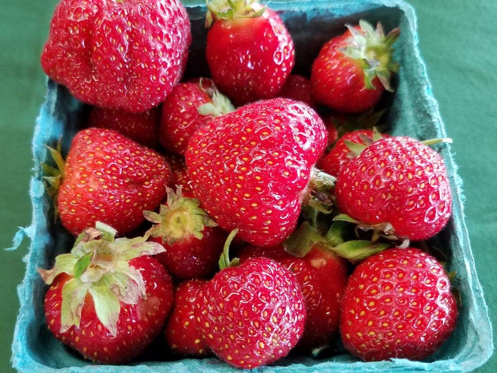 nys-berry-growers-how-to-manage-swd.jpg