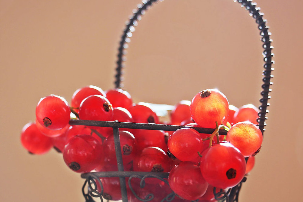 New-York-State-Berry-Growers-survey-growing-currants-goji-berries-crop.jpg