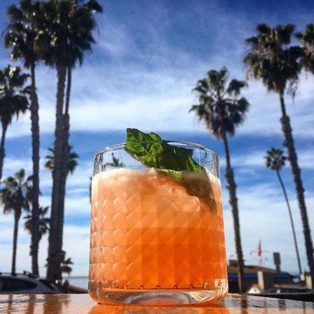 Cheers to the long weekend! #sanclemente #sanclementepier #palmtrees #beachdays #whatwinter #socality #oc #orangecounty #southcounty #socal #calivibes #beachvibes #pierside #casatropicana
