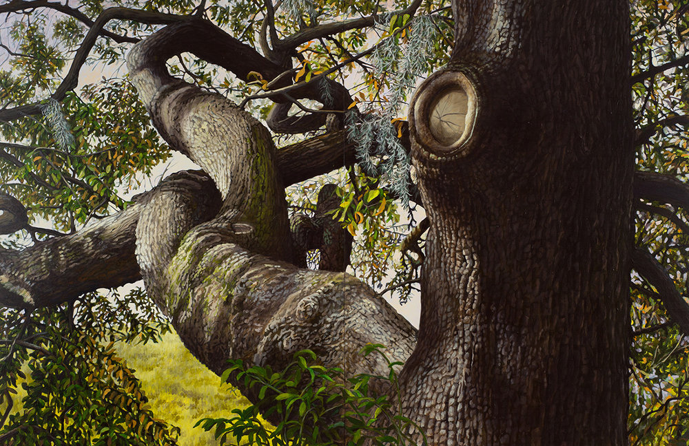 "Live Oak #1: Oil on panel 42"" x 60"" 2013"