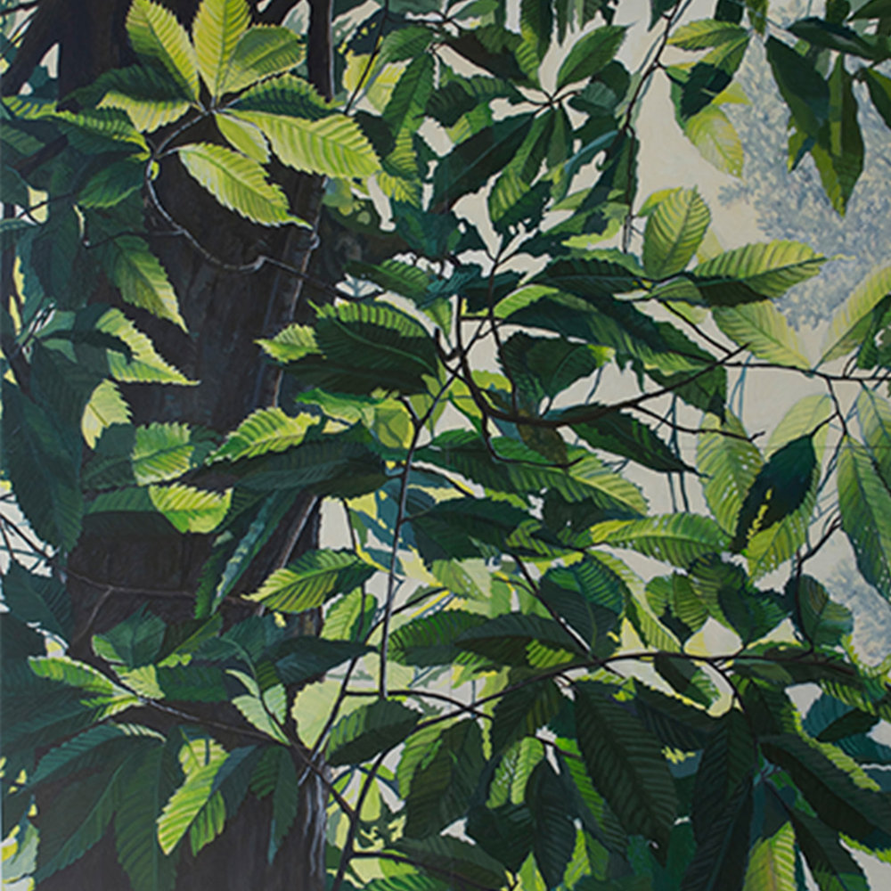 "American Chestnut #1: Oil on panel 32"" x32"" 2015"
