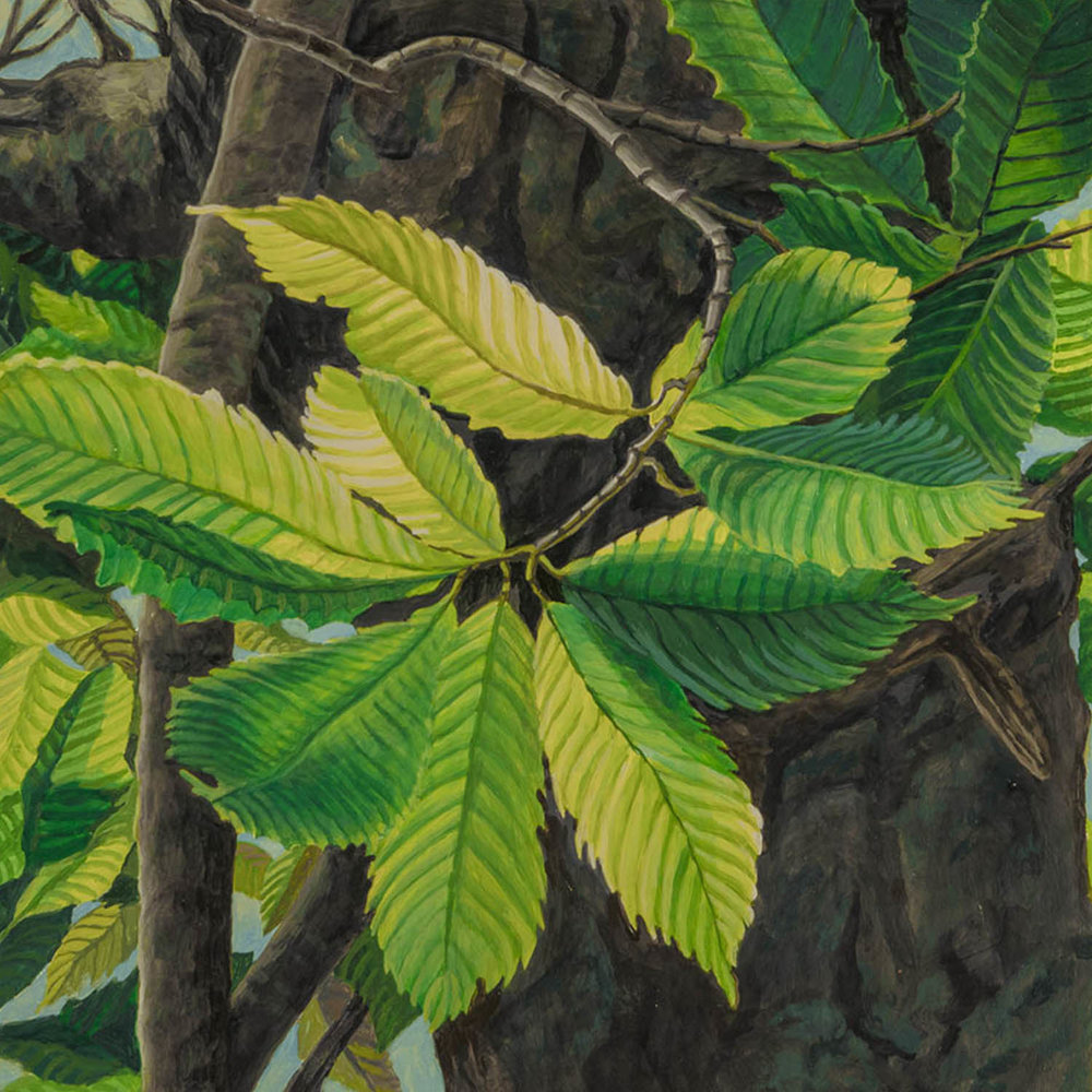 "American Chestnut #3: Oil on panel  12"" x 12"" framed 2015"
