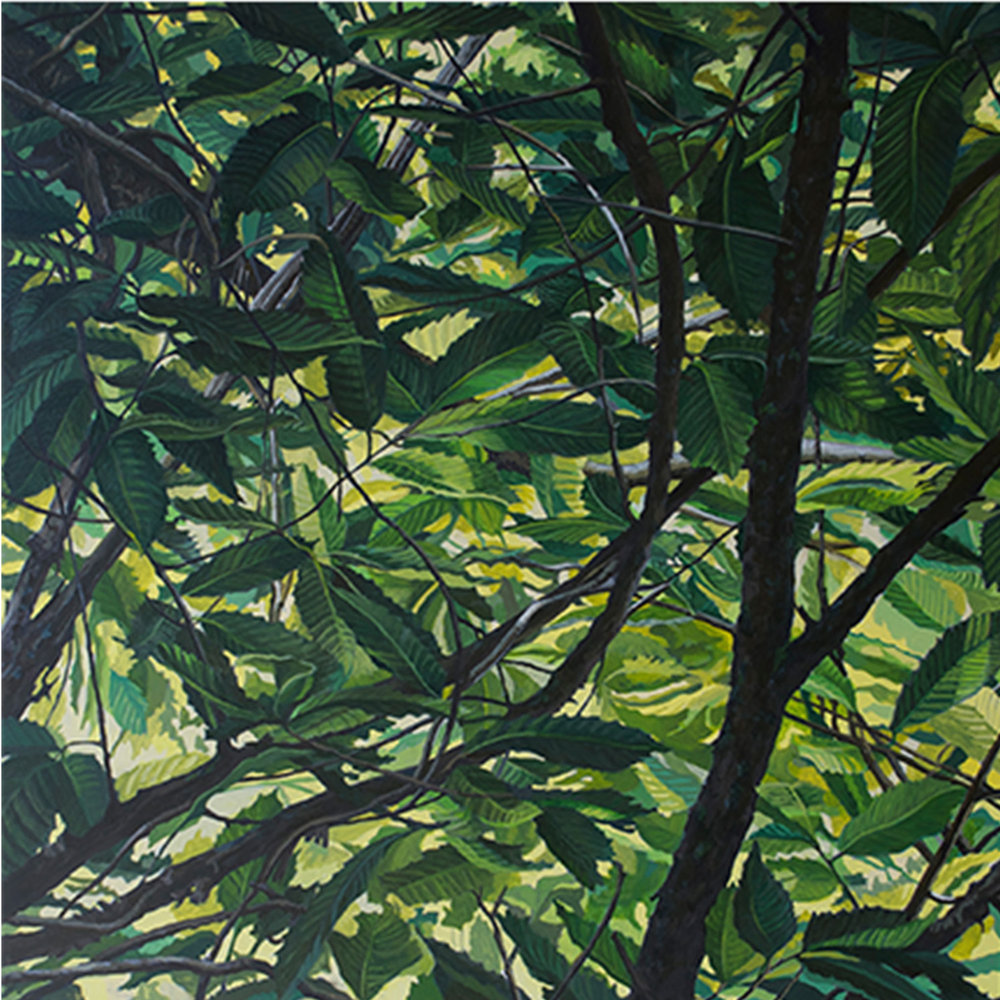 "American Chestnut #2: Oil on panel  30"" x 30"" 2015"