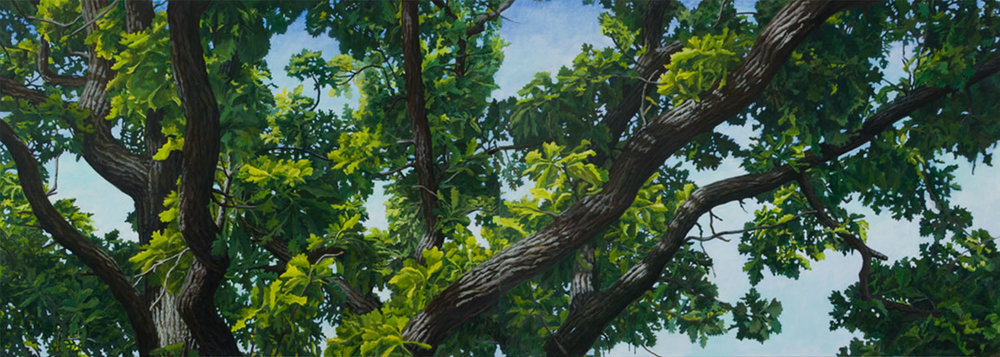 "Burr Oak Series: #1: Oil on linen canvas over panel. 30"" x 84""  2010  SOLD"