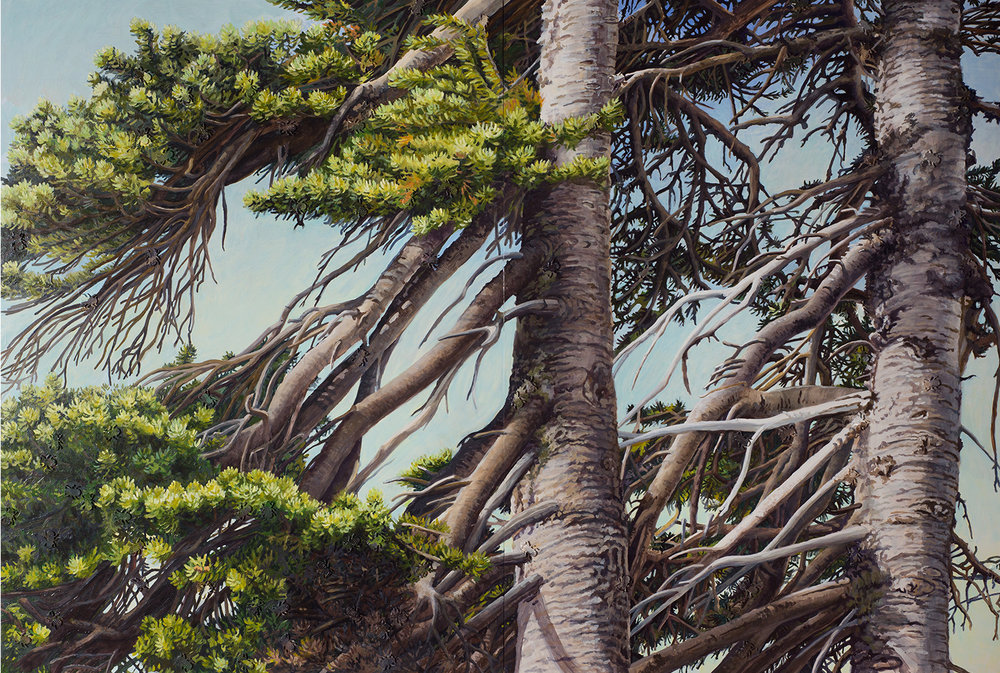 "Whitebark Pine Montana: Oil on panel 40"" x 60"" 2014 SOLD"