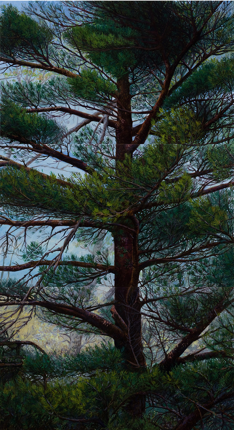 "White Pine #2: Oil on linen canvas over panel  ( three panels, 26"" x 16"" each) 48"" x 26"" 2009 SOLD"