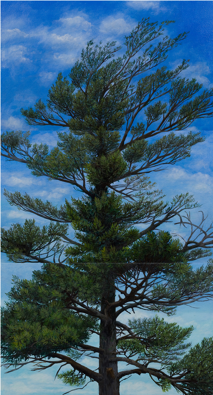 "White Pine #1: Oil on linen canvas over panel  (three panels, 26"" x 16"" each) 48"" x 26"" 2009 SOLD"