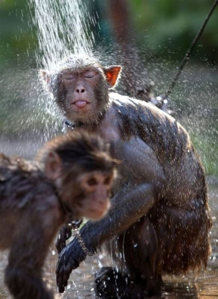 monkey-shower-big.jpg