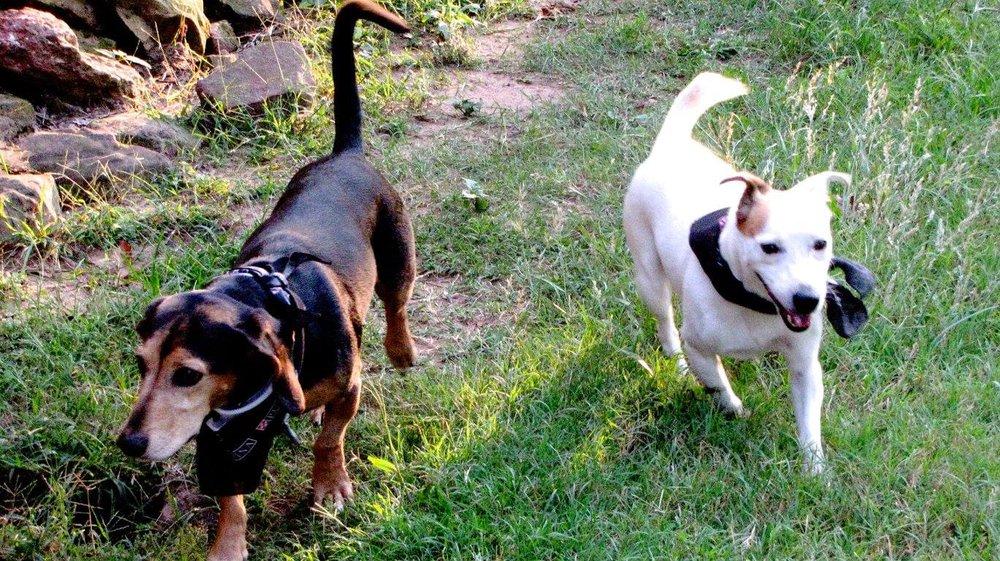 Dogs 4.jpg