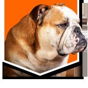 yale bulldog.png