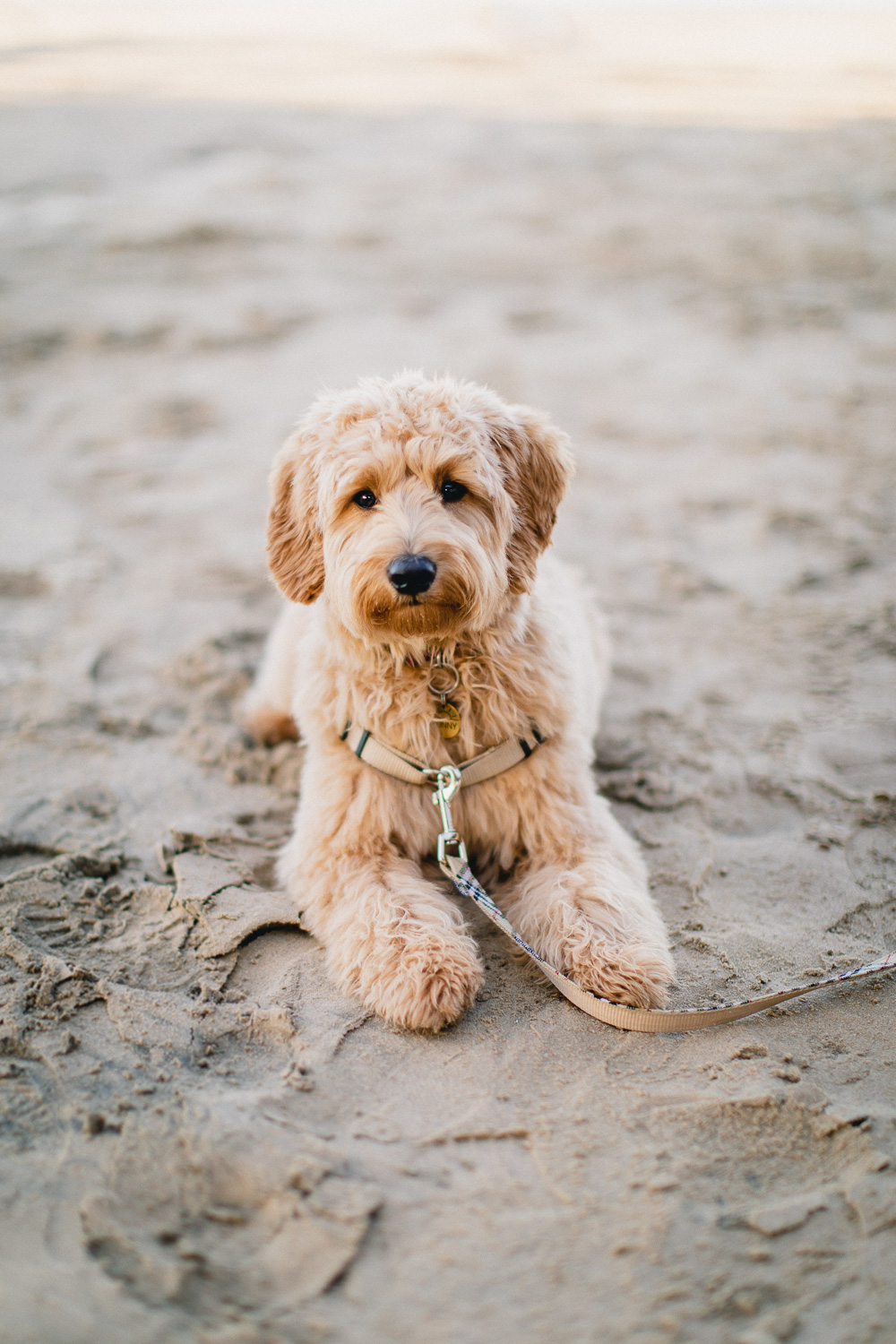 Pismo-Beach-Couples-Photography-Session-With-Puppy-101.jpg