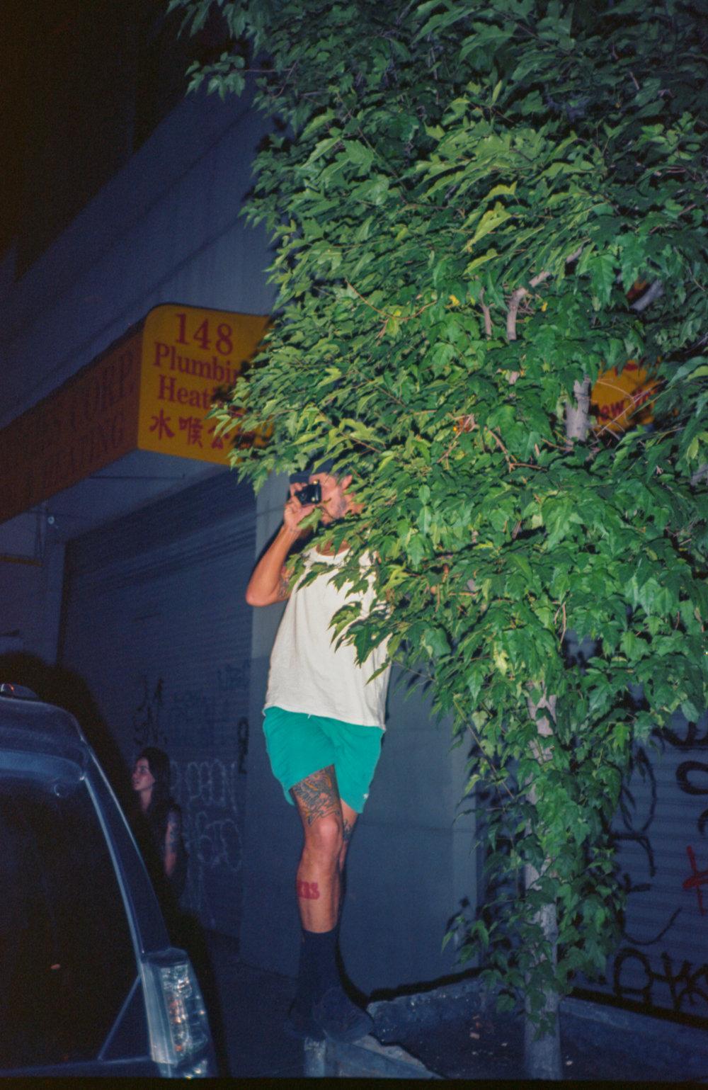Tree Flickin