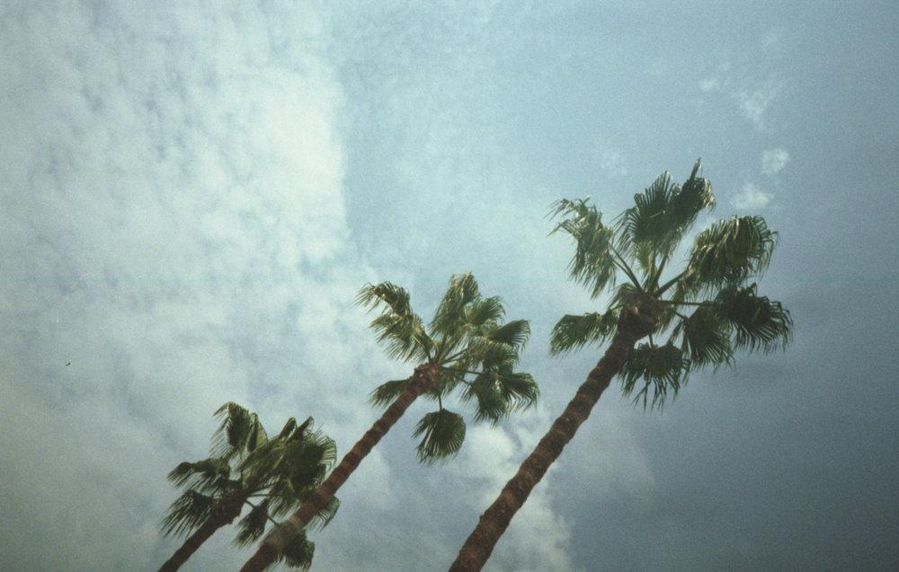 palmtrees-728.jpg