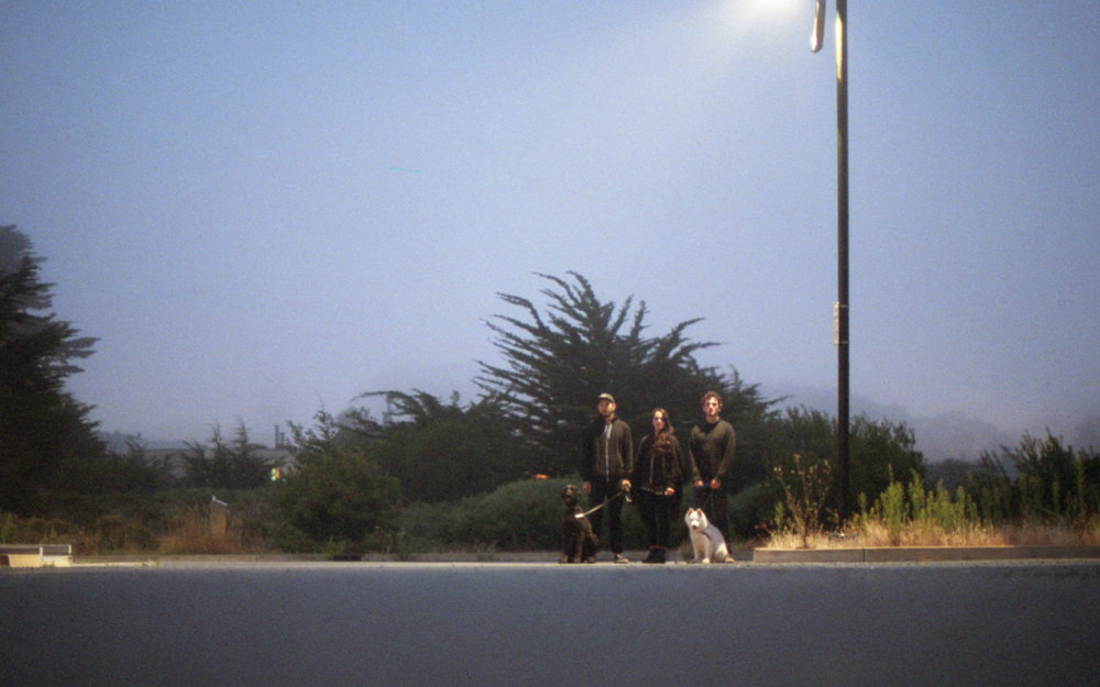 dogwalkers-800.jpg