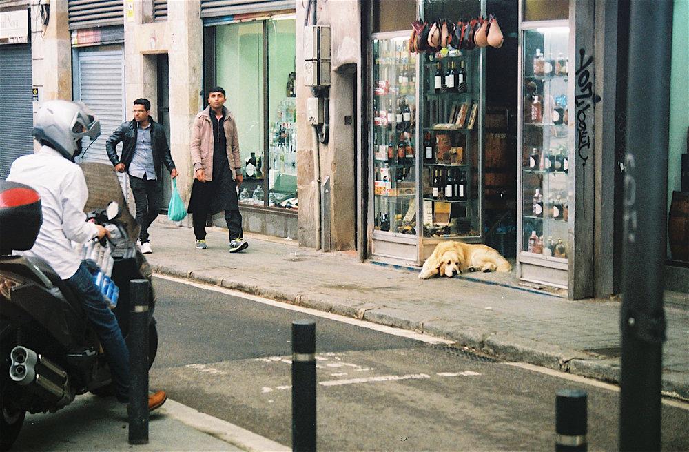 Shop Pup.jpg
