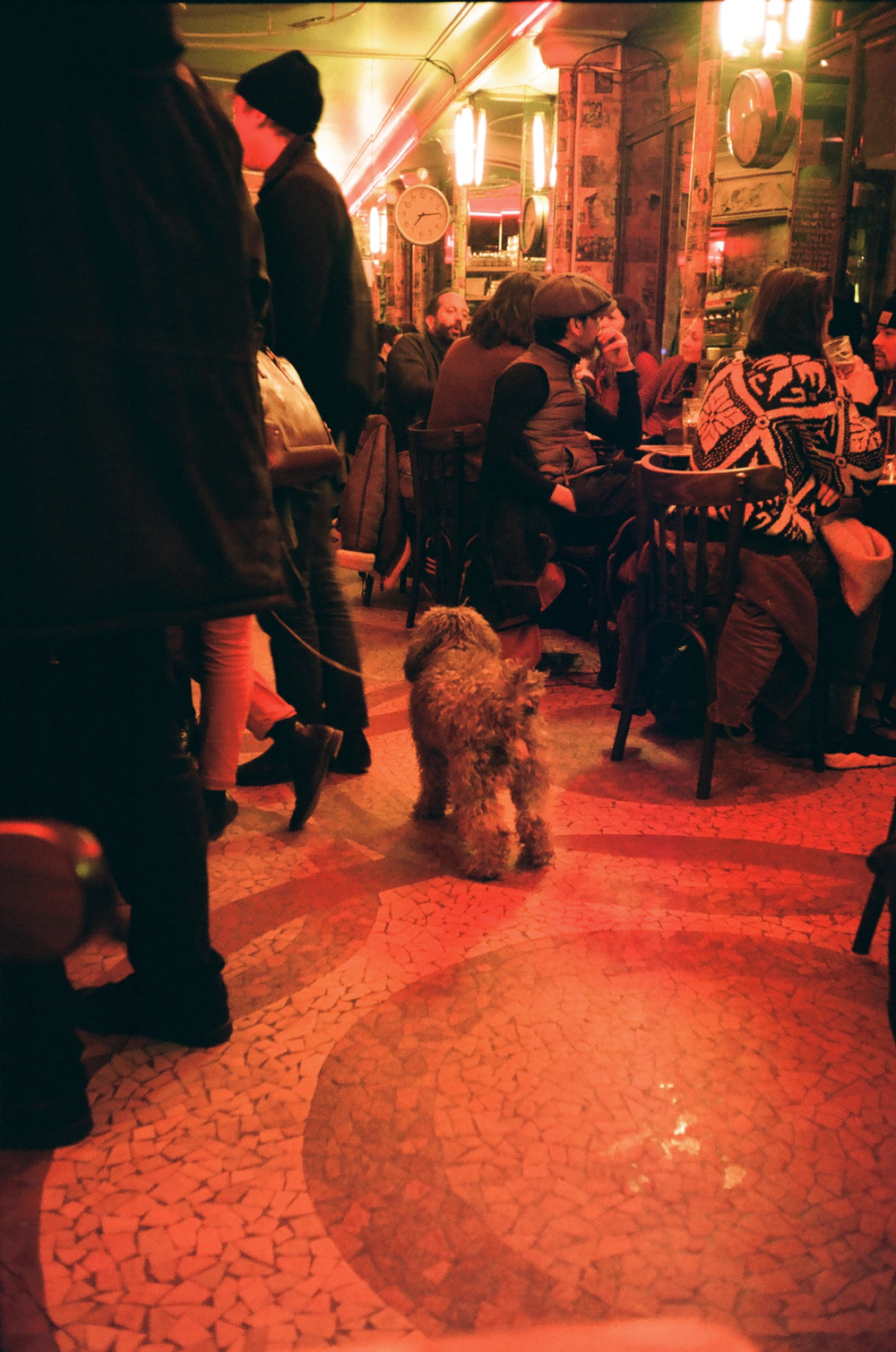 French Bar Dog
